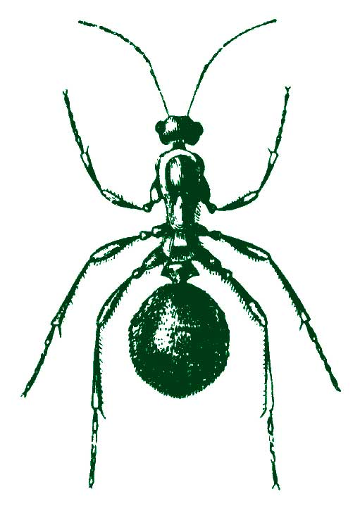 big-green-ant