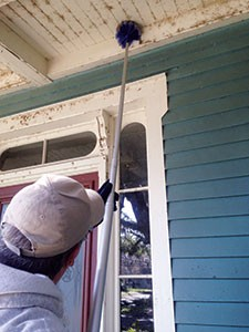 Spider removal