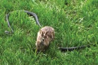 Rabbit vs. Snake