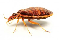 Never make an application for a pest that doesn't exist. Photo: ©istock.com/animatedfunk