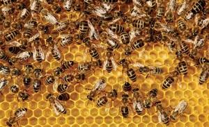 iS3384880_bee-honeycomb