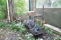 raccoon_cage_1115