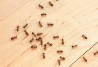 Ants. Photo: ©istock.com/Stephan Zabel