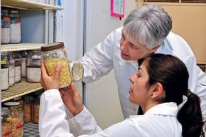 Drs. Linda Mason and Mahsa Fardisi conduct research in a Purdue entomology lab. Photo: John L. Obermeyer