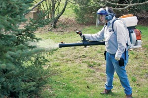 Photo: Cooper Pest Solutions