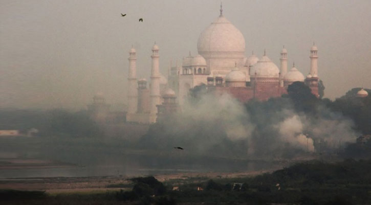 Pollution Prompts Insect Attack On Taj Mahal Pest