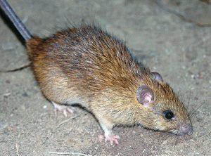 Photo: Joe Wludyga; Wikimedia Commons/CSIRO