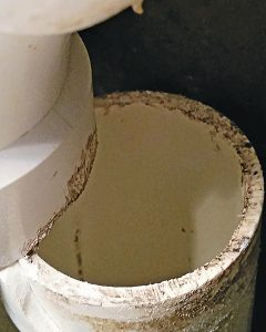 Fig. 2. Note the bite marks on the pipe. Photo: Joe Wludyga; Wikimedia Commons/CSIRO