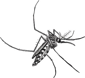 Black And White Mosquito Stock Vector