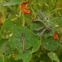 photo: Big Bug Hunt
