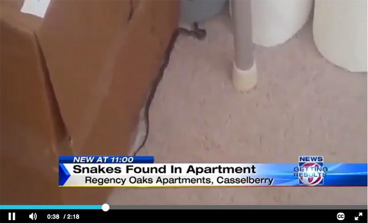 snakes-apartment-ClickOrlando