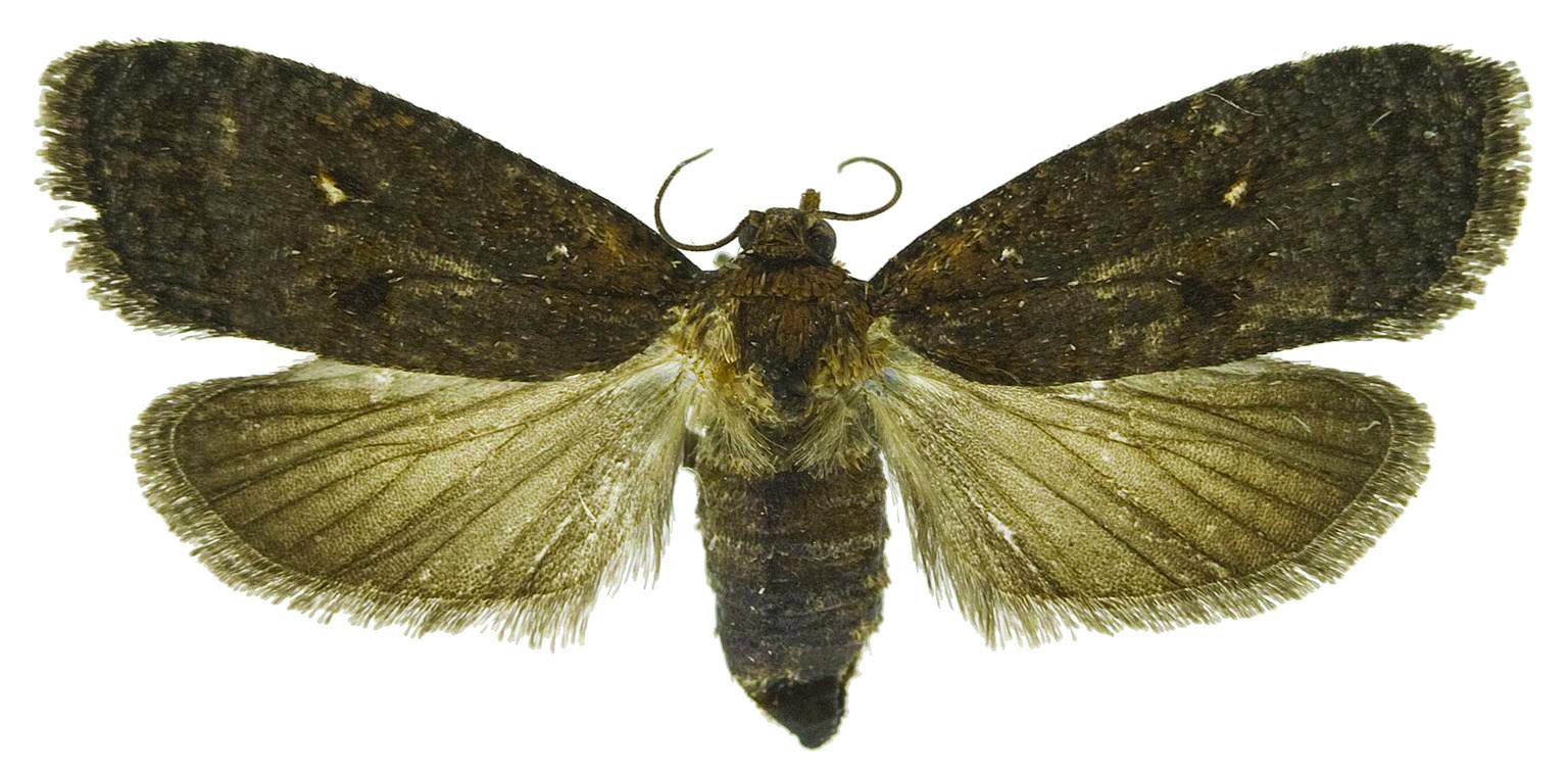 5482391-SMPT-2 Moth