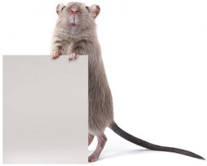 iS_89429921_Mouse