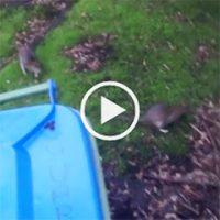 video: Ali Khan