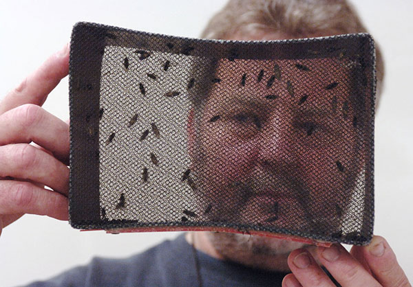IAEA technician looks at newly emerged tsetse flies in an emergence cage. (Entomology Unit, Seibersdorf, Austria) Photo: Dean Calma / IAEA