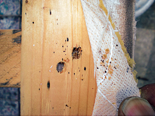 Bed Bug Infested Furniture Deface Defile Or Deconstruct