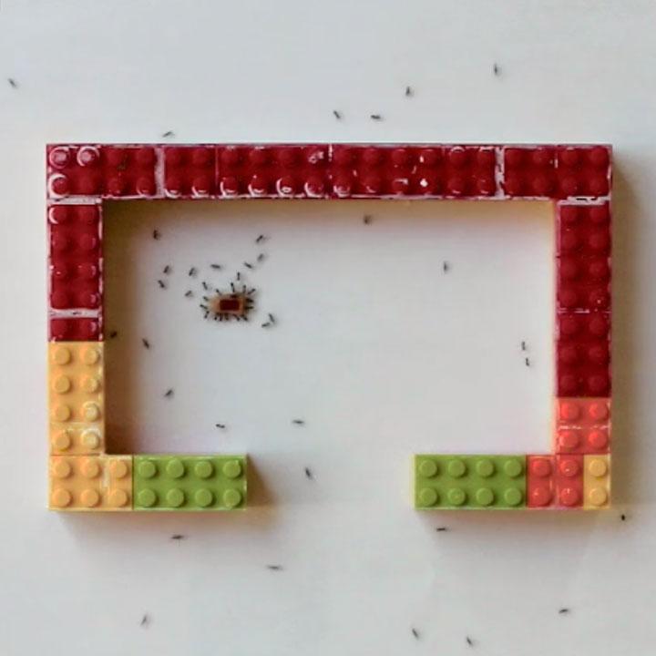 Longhorn crazy ants