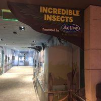 Photo: Active Pest Control