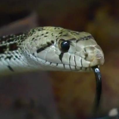 arizona-snake-12news