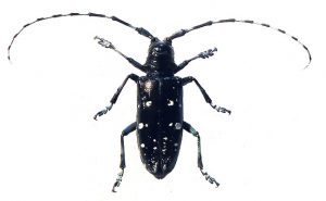 Photo: New York State Integrated Pest Management Program