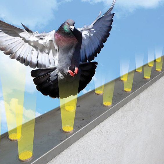 How To Repel Birds Without A Physical Barrier Pest Management Professional
