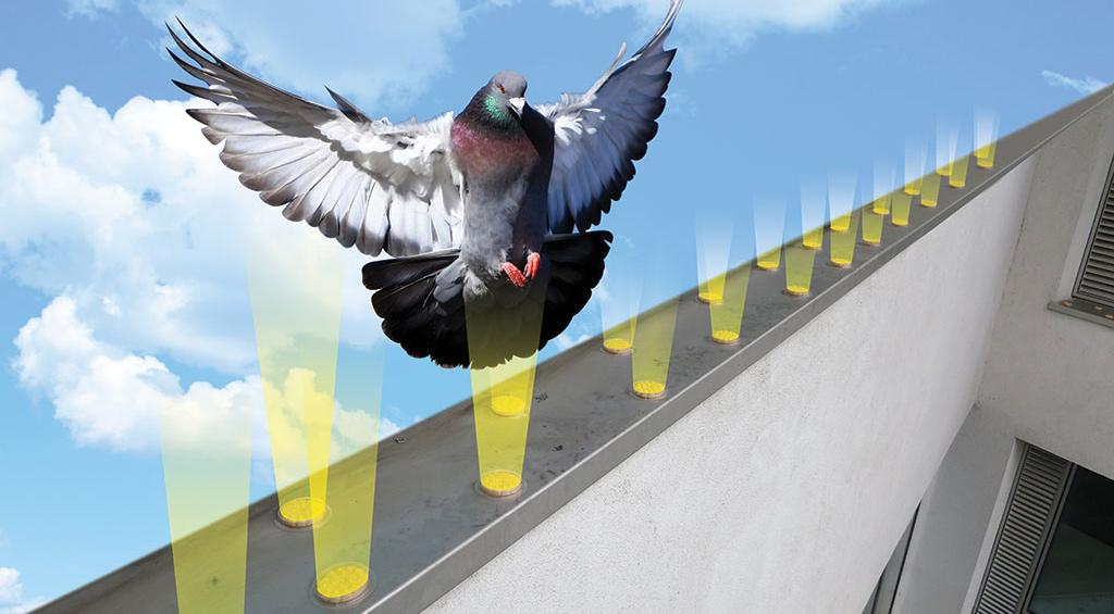 Optical-Gel1-bird1024x565