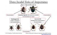 tick chart Image: Dr. Wegner