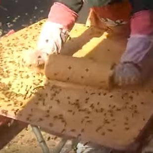 bees-vendor-swarm