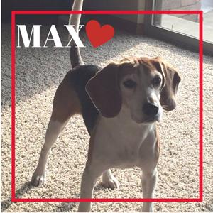 Wil-Kil's Max