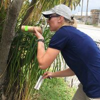 Research entomologist Catherine Pruszynski. Photo: Florida Keys Mosquito Control District