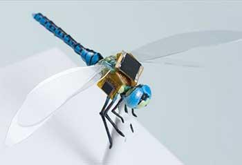 cyborg-dragonfly-dragonfleye-draper