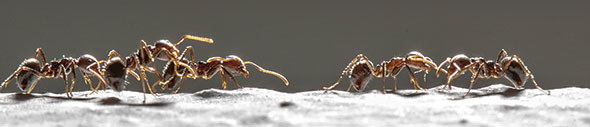 iS175462484ants-marching-590