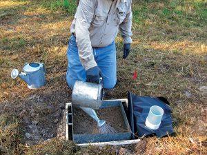 Treating a concrete slab plot.  Photo: USFS/Gary Alpert