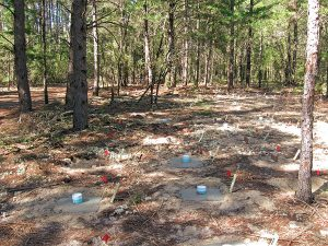 A completed block  of plots on the Chipola Experimental Forest in Florida. Photo: USFS