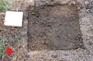 A freshly completed groundboard plot. Photo: USFS