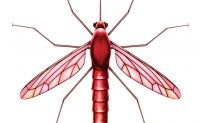 iS36375866-lg-mosquito