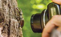 PHOTO: iStock.com/MRodionova