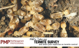 2018 termite survey