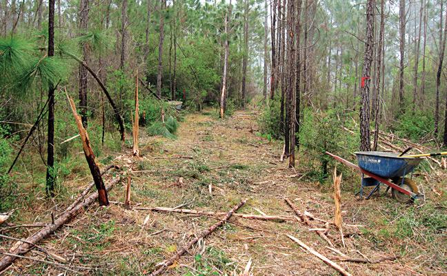 A single plot lane after clearing debris and vegetation