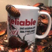 Reliable Pest Solutions, cockroaches