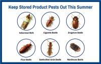 Photo courtesy of McCloud Pest Management Solutions