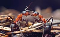ants. PHOTO: iStock.com/buslig22