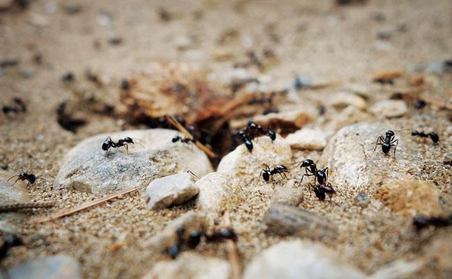 PHOTO: iStock.com/FLORY