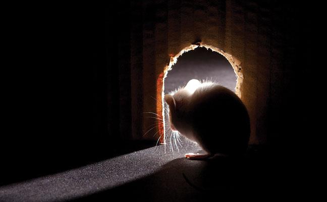 PHOTO: iStock.com/NeilLockhart