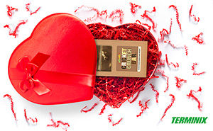 Heart-shaped gift box containing chocolate-covered crickets. PHOTO: TERMINIX