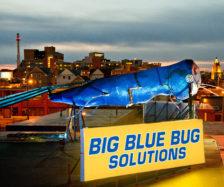 Photo: Big Blue Bug Solutions