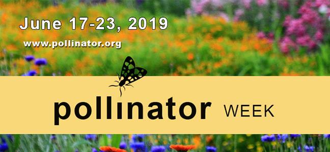 pollinator-week-logo-648x300