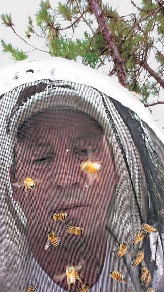 Bees on Claude Griffin. Photo: Gotcha Pest Control