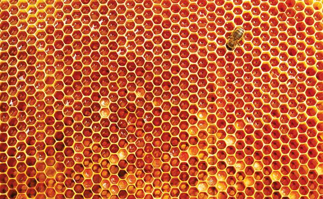 honeycomb PHOTO: ISTOCK.COM/PRZEMEKSUWALKI