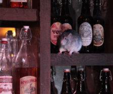 Rat bar (PHOTO: THE SAN FRANCISCO DUNGEON)